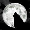 Bild zur News Wolfpakk
